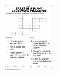 Plant Parts Crossword -  Hint